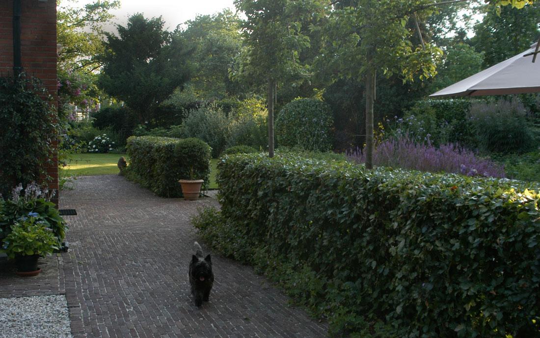 Janine ten horn tuinontwerpen achtertuin for Tuinontwerpen achtertuin